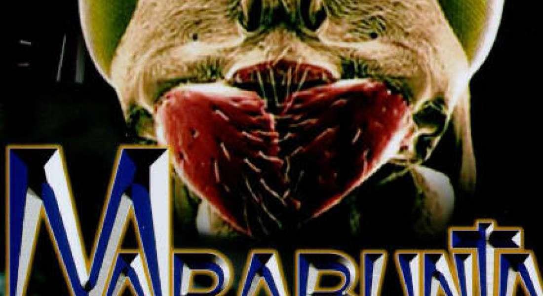 Marabunta: l'invasion souterraine