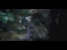Grizzly Park theatrical trailer