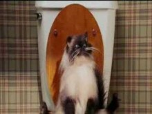 farting cat