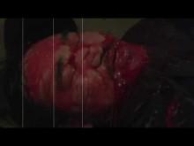Piranha Man Versus Wolf Man: Howl of the Piranha trailer