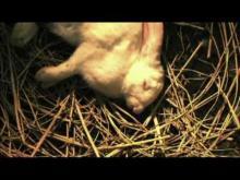 Rabbit Horror 3D - Trailer