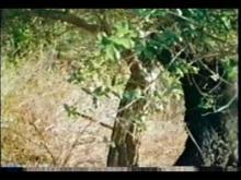 The Curse of Bigfoot (1978) - Trailer